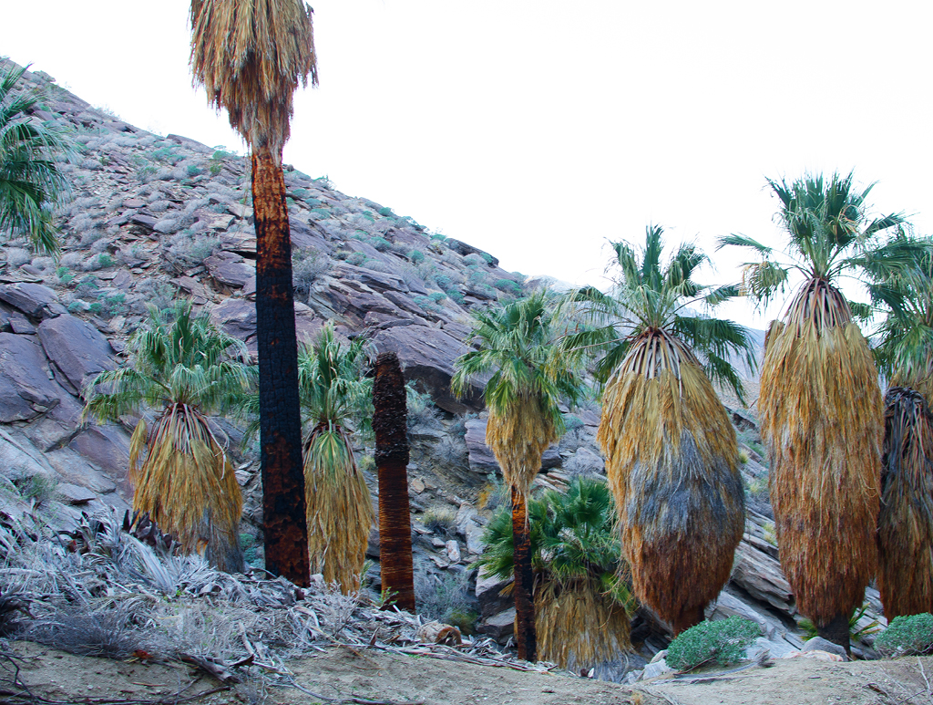 palm-canyon-hike-01