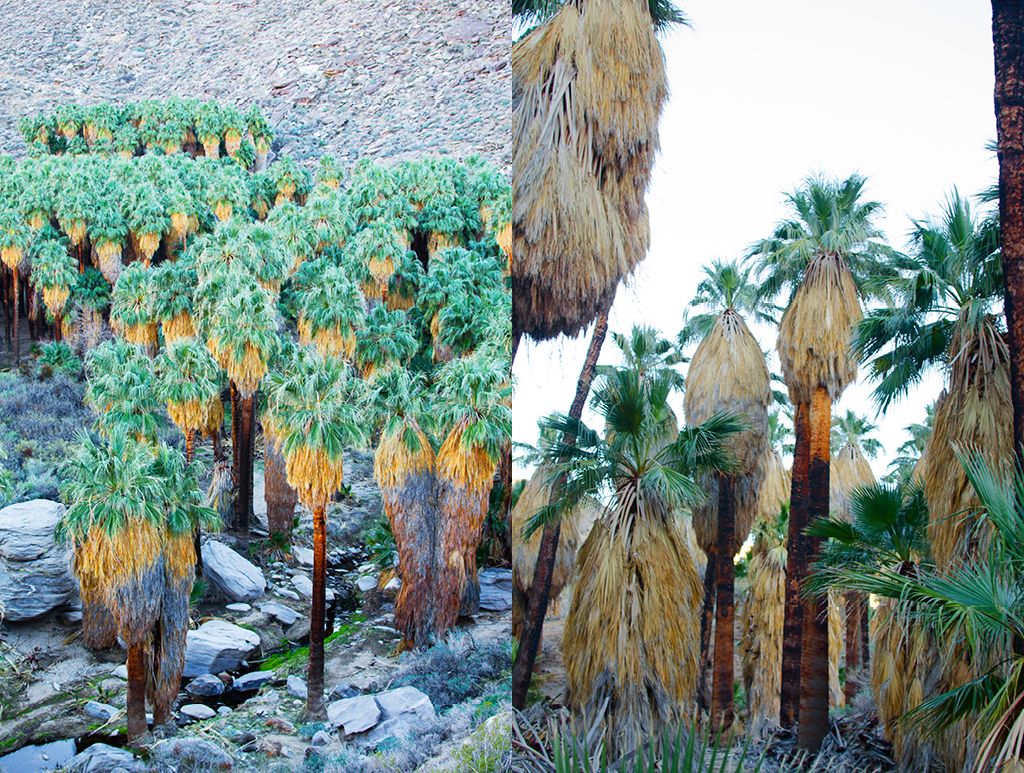 palm-canyon-hike-03