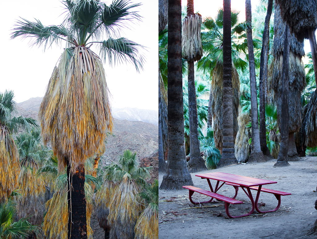 palm-canyon-hike-05