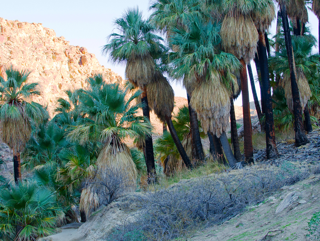 palm-canyon-hike-07