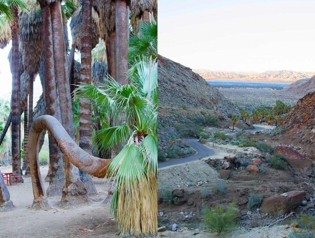 palm canyon hike