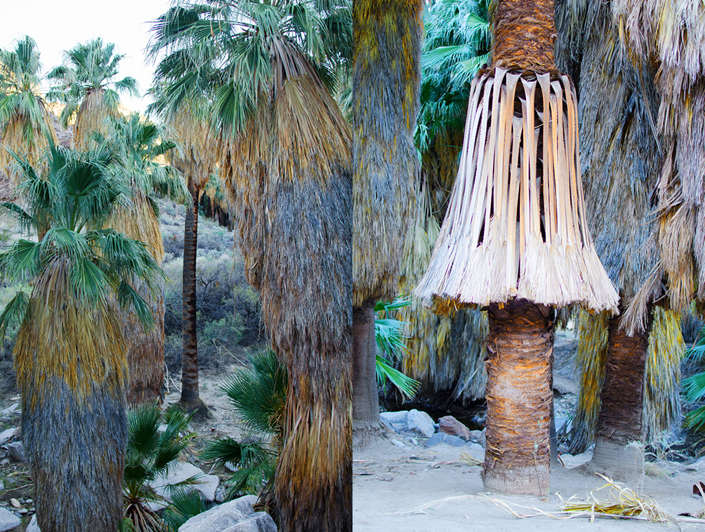 palm-canyon-hike-09