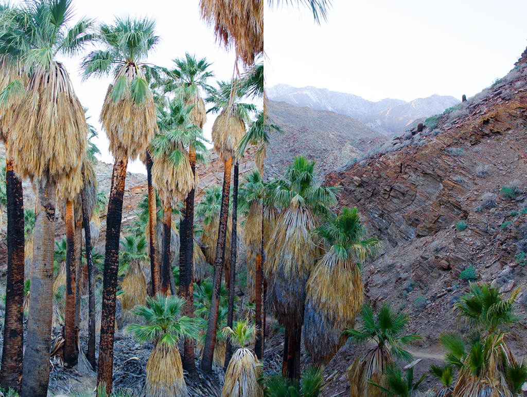 palm-canyon-hike-10